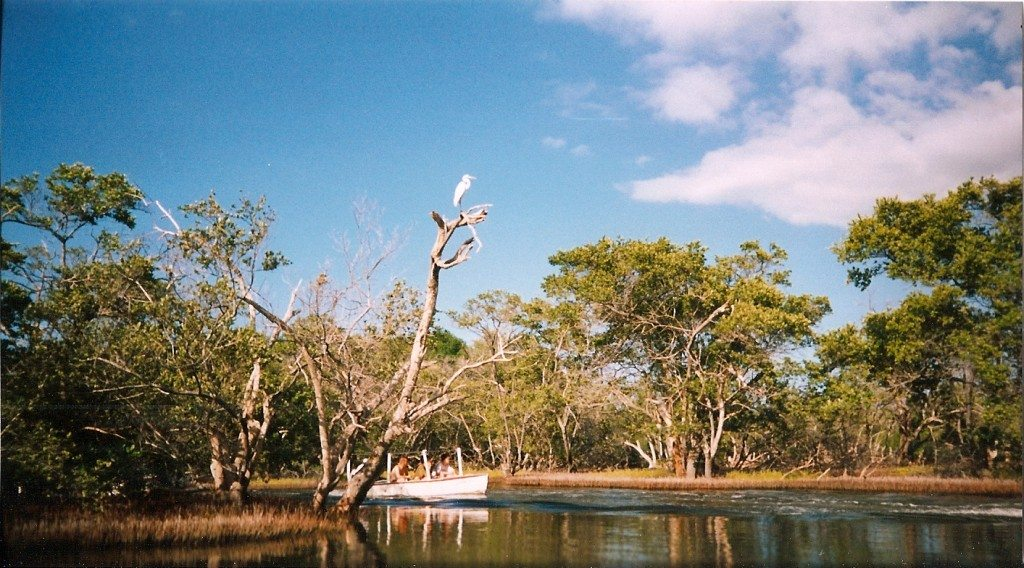 Mangroven in der Lagune La Restinga. (© Alin Cucu)