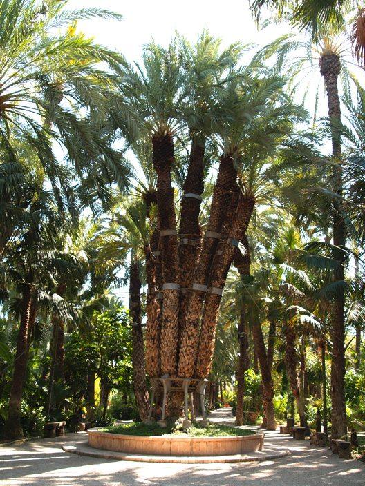 Die kaiserliche Palme - La palmera imperial (Bild: Natalia Muler)