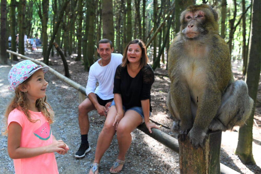 Affen aus der Nähe bestaunen (Bild: Affenberg Salem)