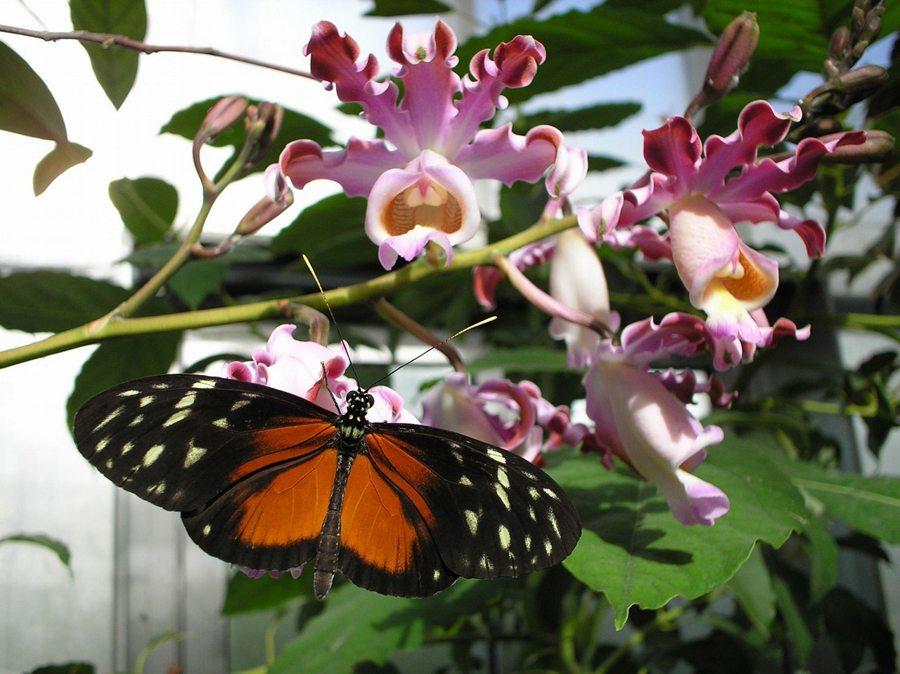 Im Schmetterlingshaus (Bild: Insel Mainau)