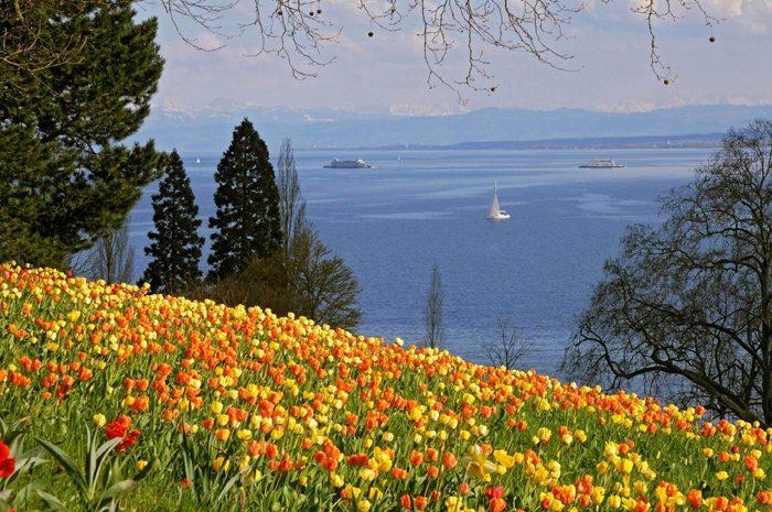 De Frühling auf der Mainau (Bild: Insel Mainau)