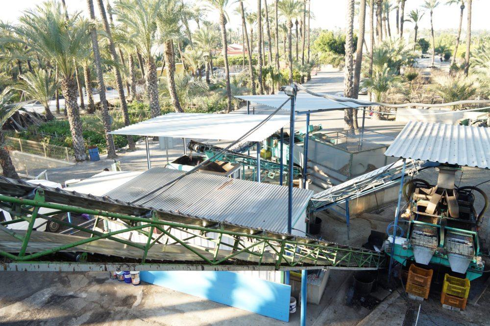 Die ersten Arbeitsschritte unter dem freien Himmel (Bild: Olivenölmühle El Tendre)