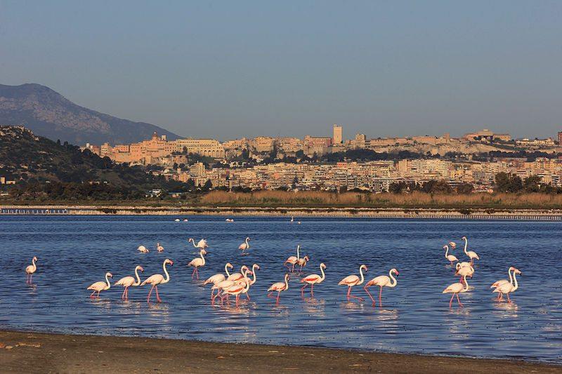 Stadt Cagliari im Hintergrund (Bild: Stefano Marrocu, Wikimedia, CC)