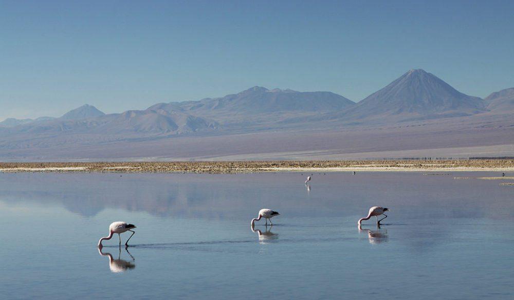 Flamingos im Salzsee Salar de Atacama (Bild: BenGoetzinger, Wikimedia, CC) atacama wüste