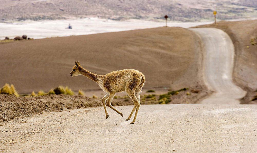 Unterwegs in der Atacama-Wüste (Bild: Luca Galuzzi, Wikimedia, CC) atacama wüste