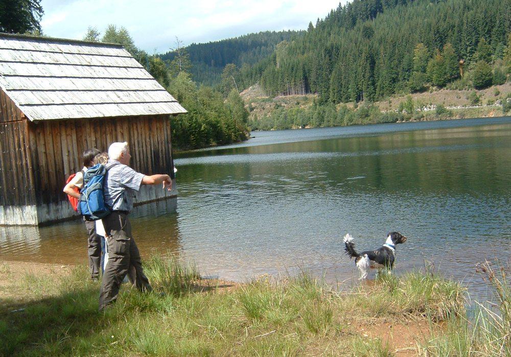 Wandern mit Hund (Hans-Dieter Buchmann  / pixelio.de)