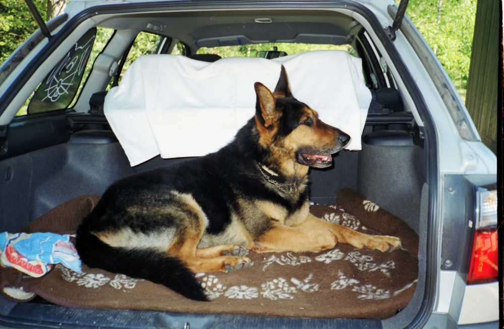 Mit dem Hund unterwegs (Bild: Windrose  / pixelio.de)