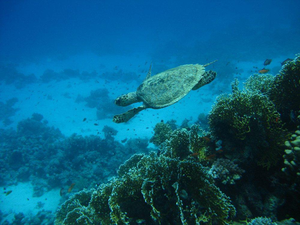 Das Rote Meer – Unterwasserwelt bei Safaga (Bild: Romy Schmidt)