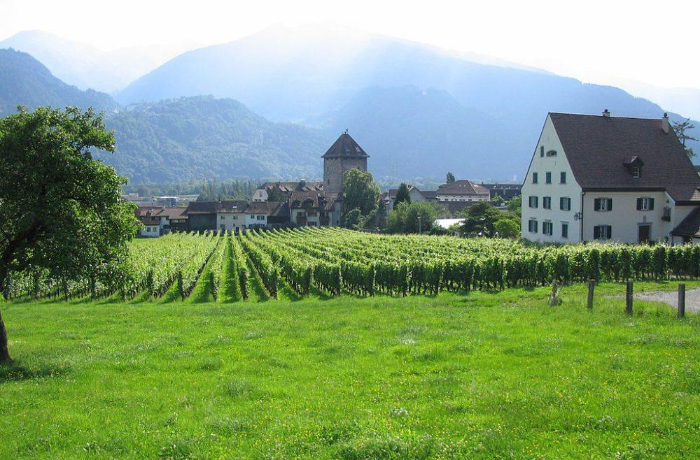 Weinberge ums Schloss Brandis und im Hintergrund Pfäfers und Pizol (Bild: Sulgenau, Wikimedia, CC)