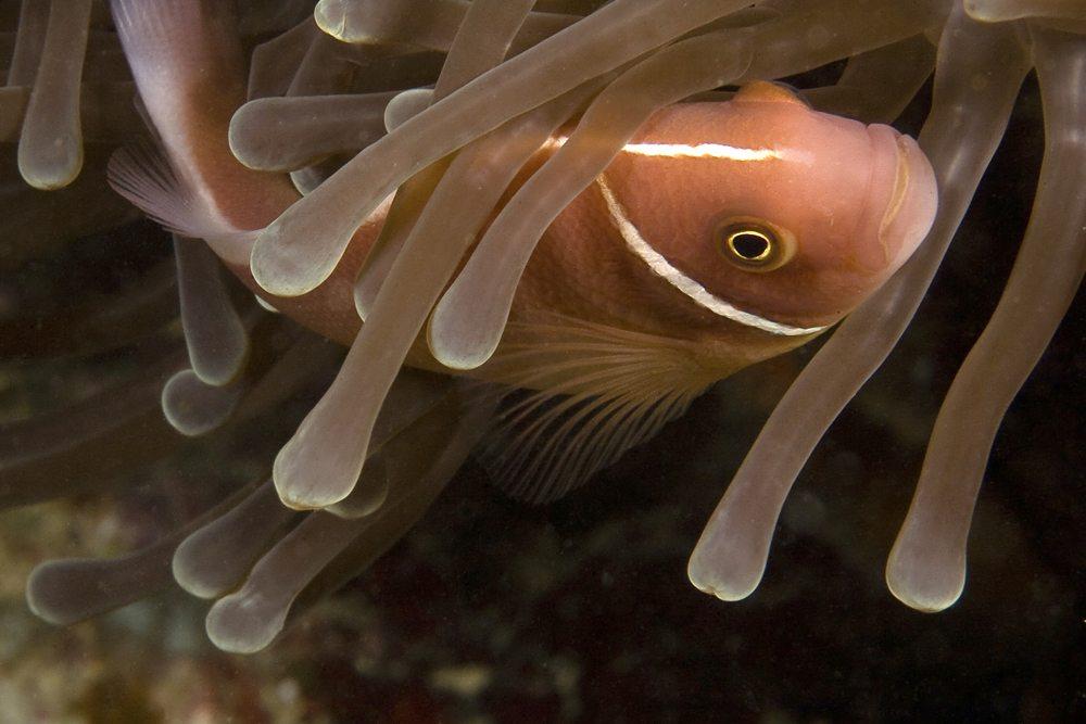 Unterwasserwelt in ihrer Vollendung (Bild: Harald Schottner  / pixelio.de)