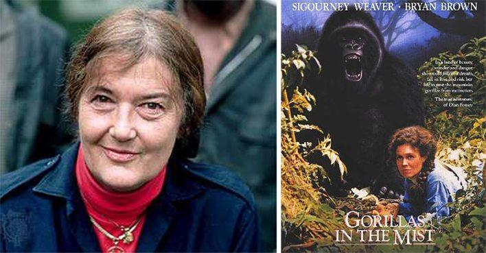 """Dian Fossey im Leben und im Film (Bild: links - Dian Fossey, aufgenommen von Yann Arthus-Bertrand, Wikimedia; rechts – Poster des Films """"Gorillas im Nebel"""", © Universal Pictures, Wikimedia)"""