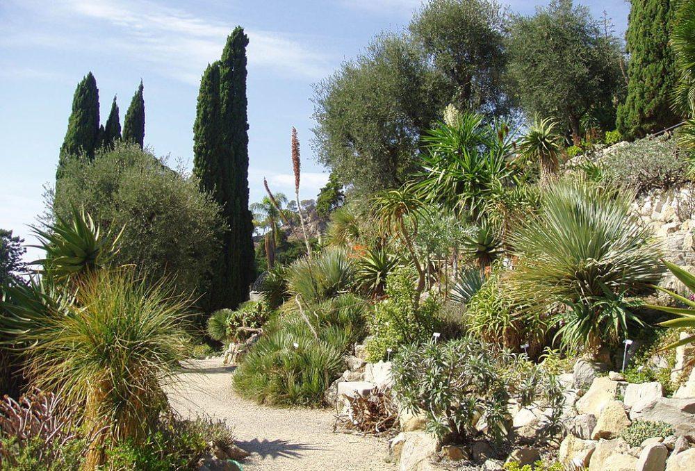 Spaziergang im Giardini Botanici Hanbury (Bild: Daderot, Wikimedia, CC)