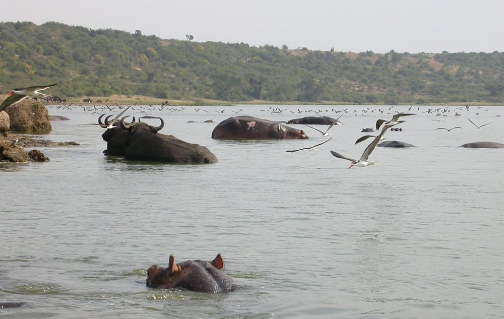 Artenvielfalt im Queen Elizabeth Nationalpark, Uganda (Bild: Duncan Wright, Wikimedia, CC)