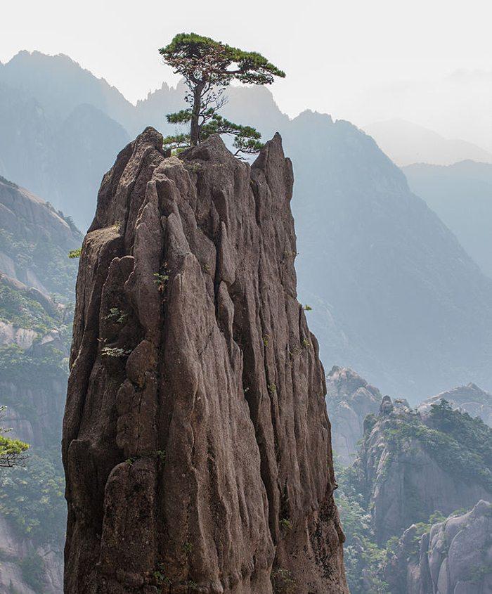 Einsame Kiefer krönt einen Berggipfel im Huang Shan Gebirge (Bild: Stephane.janel, Wikimedia, CC)