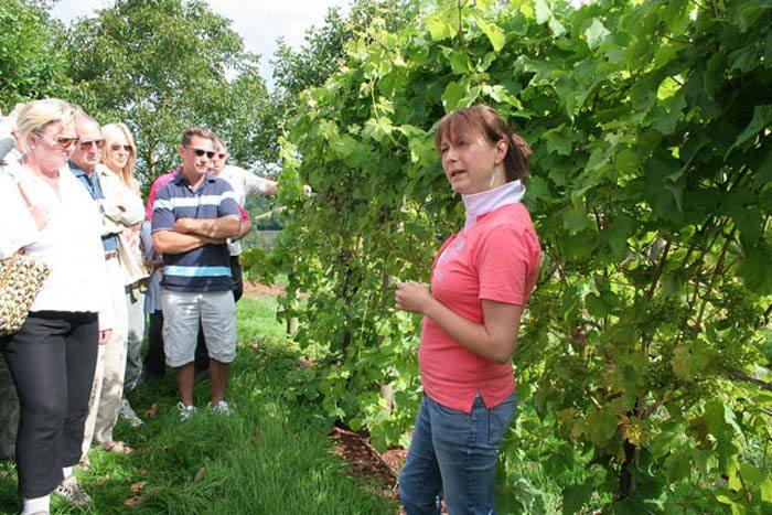 Führung durch die Weinberge von Sharpham Trust (Bild: Kate Jewell, WIkimedia, CC)