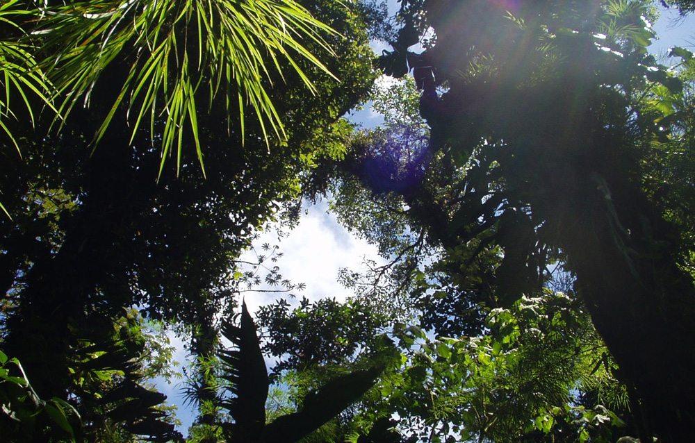 Tropischer Urwald Costa Ricas (Bild: eda / pixelio.de)