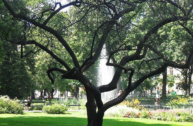 Die Planty – der zauberhafte Grüngürtel rund um die Altstadt (Bild: Magdalia25, Wikimedia, CC)