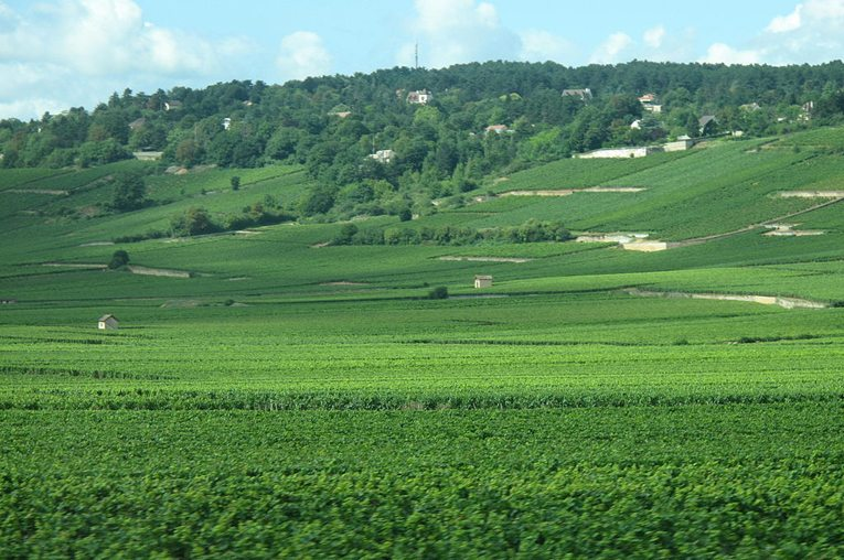 Weinberge von Beaune (Bild: Tangopaso, Wikimedia)
