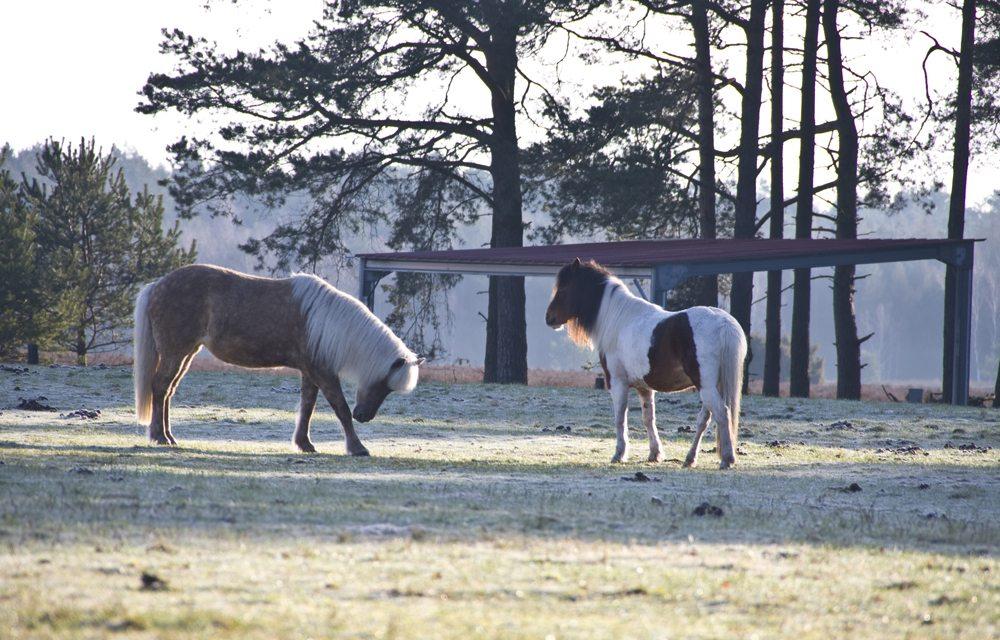 Tiere in der Lüneburger Heide (Bild: Thorben Wengert  / pixelio.de)