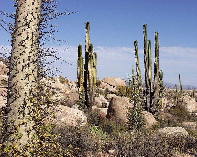 Wüstenlandschaft bei Ensenada (Bild: Tomas Castelazo / Wikimedia / CC)