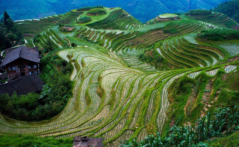 Reisterrassen von Longsheng (Bild: severin.stalder, Wikimedia, CC)