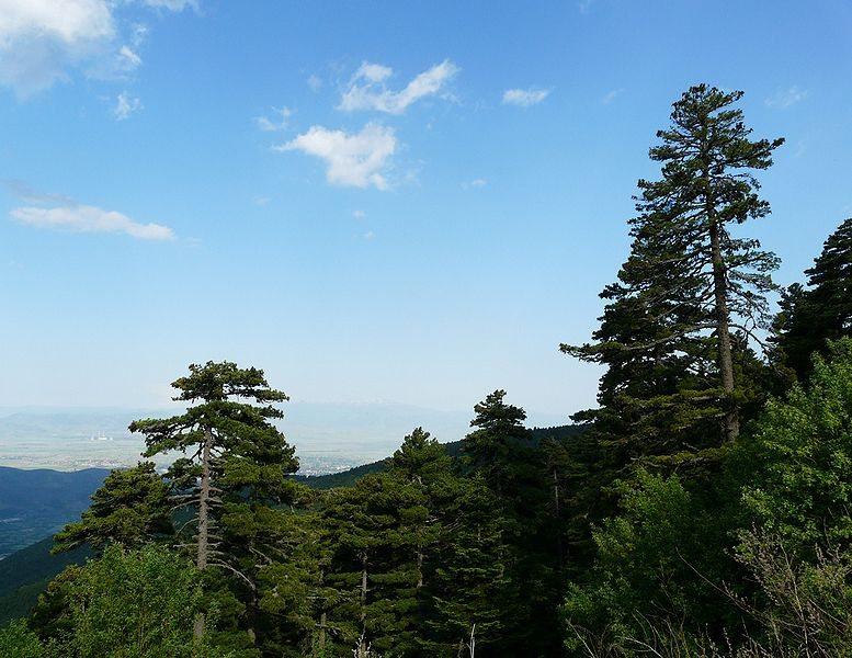Kiefernwälder im Nationalpark Pelister (Bild: Ksenija Putilin / Wikimedia / CC)