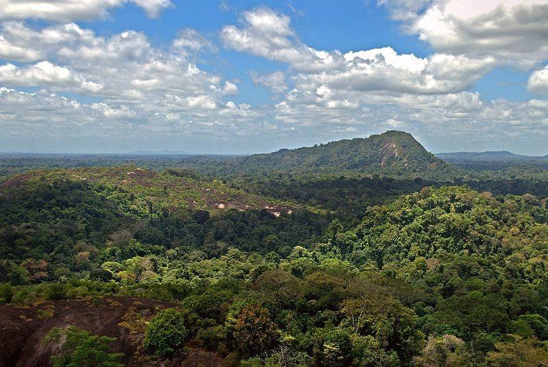 Amazonas in Suriname (© David Evers / Wikimedia / CC)