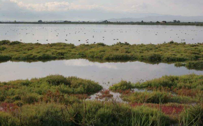 Typische Landschaft des Ebrodeltas (Bild: Pixel, Wikimedia, CC)
