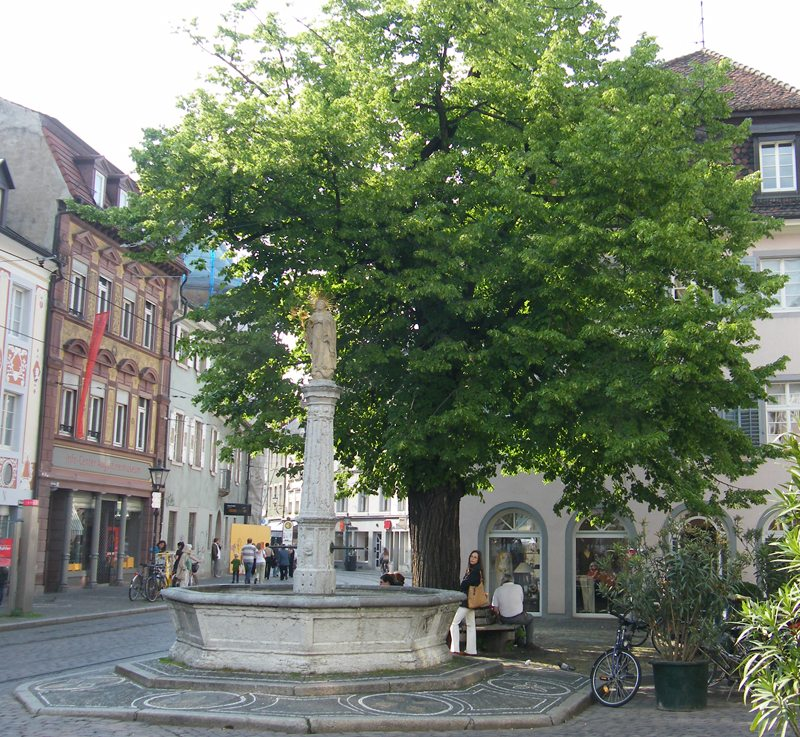 Die Oberlindener Linde in Freiburg im Breisgau (Bild: FGodard, Wikimedia, CC)