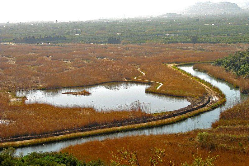 Naturpark Marjal de Pego-Oliva (Bild: Espencat, Wikimedia)