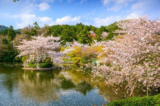 Die Magie des Zen-Gartens im Ryoanji-Tempel (Bild: © Sean Pavone - shutterstock.com)