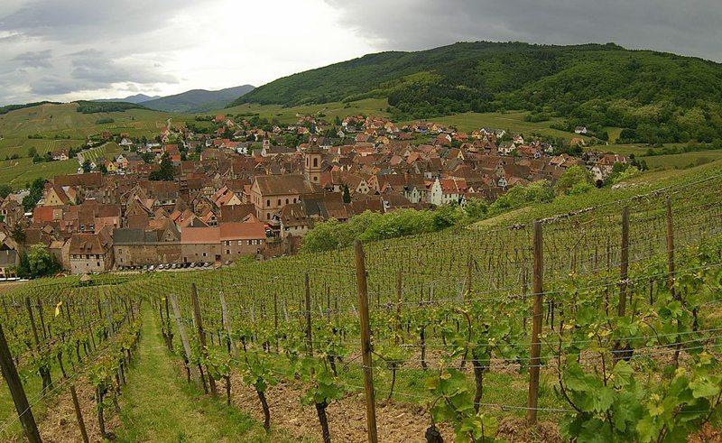 Riquewihr und seine Weinberge (Bild: Adam Baker, Wikimedia, CC)