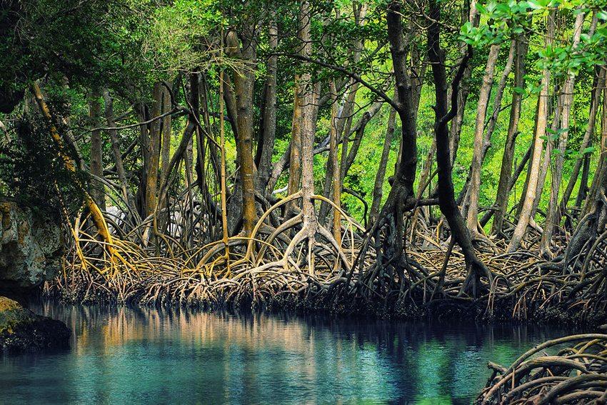 Mangroven in Los Haitises Nationalpark, Dominikanische Republik (Bild: Anton Bielousov, Wikimedia, CC)