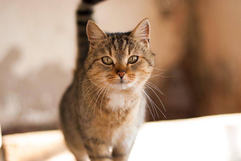Katzen fühlen sich in ihrem gewohnten Umfeld am wohlsten. (© www.augenkick-webdesign.de  / pixelio.de)