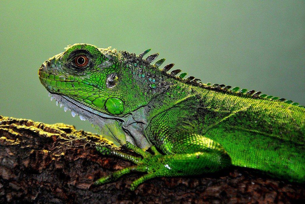 Betreuer für exotische Tiere sind nicht immer leicht zu finden. (© Kurt F. Domnik  / pixelio.de)