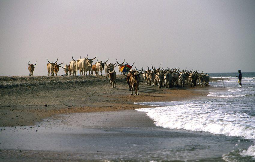 Auf dem Strand von Gambia (Bild: Kotoviski, Wikimedia, CC)