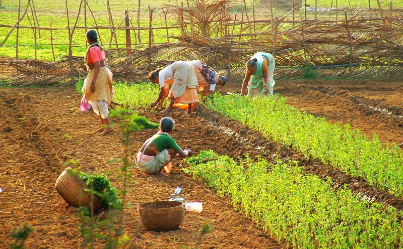 Frauen bei der Landarbeit, Taluka Pernem im Norden Goas (Bild: Dominik Hundhammer, Wikimedia, GNU)