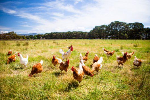 Tiere auf dem Bauernhof - vor allem für kleine Kinder ein Erlebnis (Bild: FiledIMAGE - shutterstock.com)