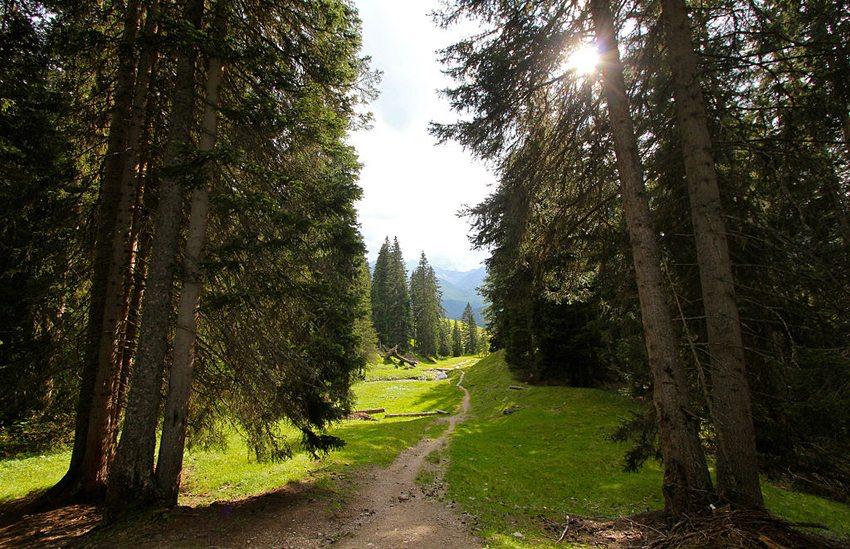 Wanderweg bei Arosa (Bild: Jürg Vollmer, Wikimedia, CC)