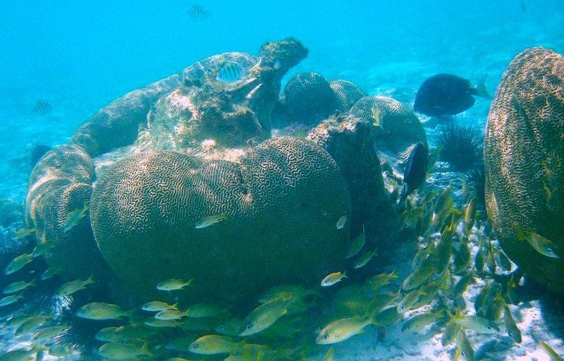 Tauchen auf Islas Los Roques (Bild: Márcio Cabral de Moura, Wikimedia, CC)