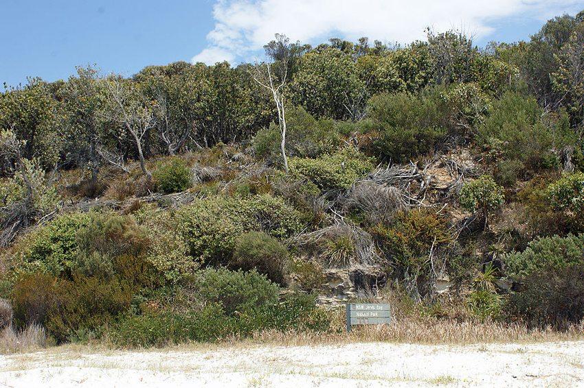 Der Jervis-Bay-Nationalpark in der Nähe des Hyams Beach (Bild: albinfo, Wikimedia, CC)