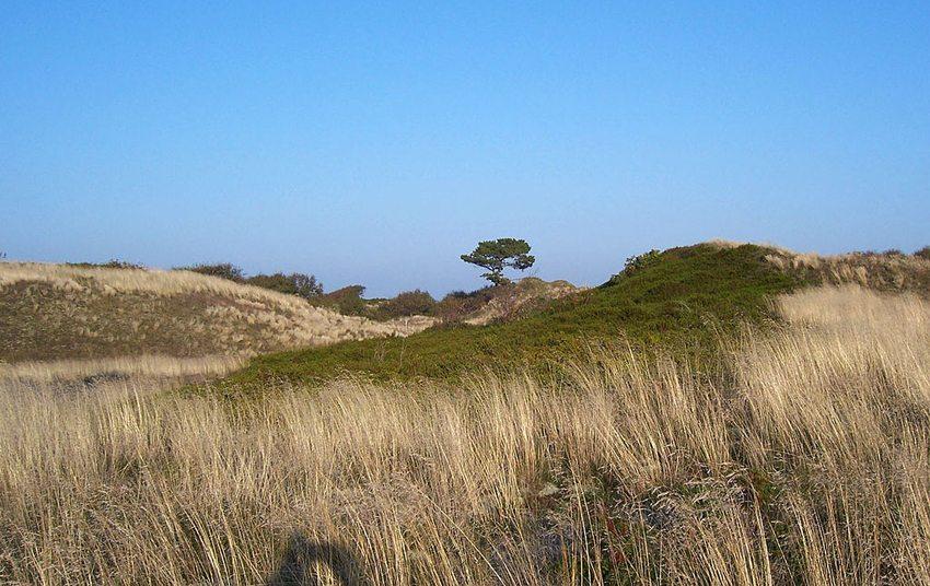 Tertiärdünen auf der Nordseeinsel Spiekeroog (Bild: Jürgen Howaldt, Wikimedia, CC)