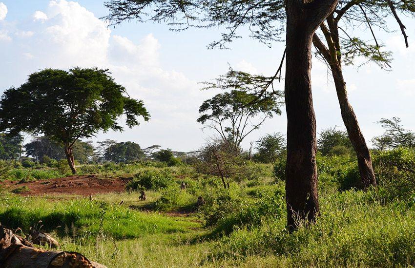 Flora der Serengeti (Bild: Christopher T Cooper, Wikimedia, CC)