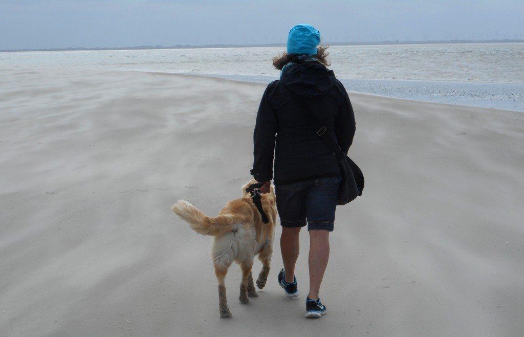 Schützen Sie Ihren Hund vor Unterkühlung (© Klaus Steves  / pixelio.de)