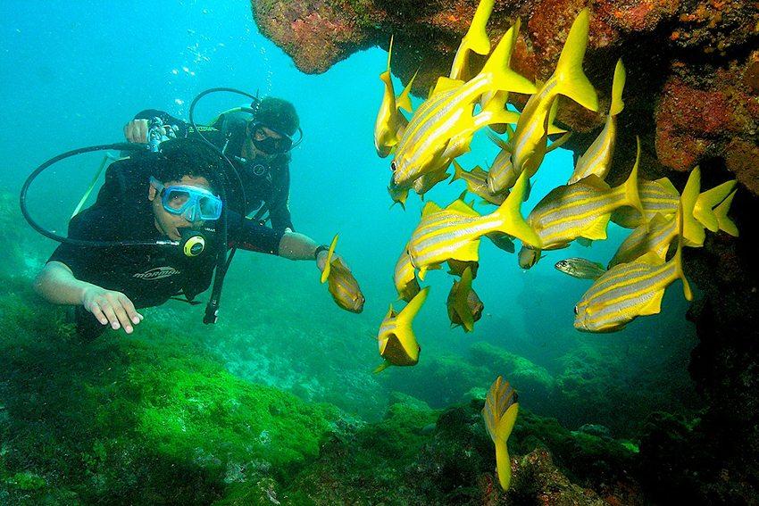 Fernando de Noronha – magische Unterwasserwelt (Bild: Tadeu Pereira, Wikimedida, CC)