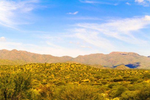 Die Vegetation Namibias ist karg und weitflächig von Gräsern, Büschen und tief verwurzelten Bäumen gekennzeichnet. (Bild: © Mark52 - shutterstock.com)