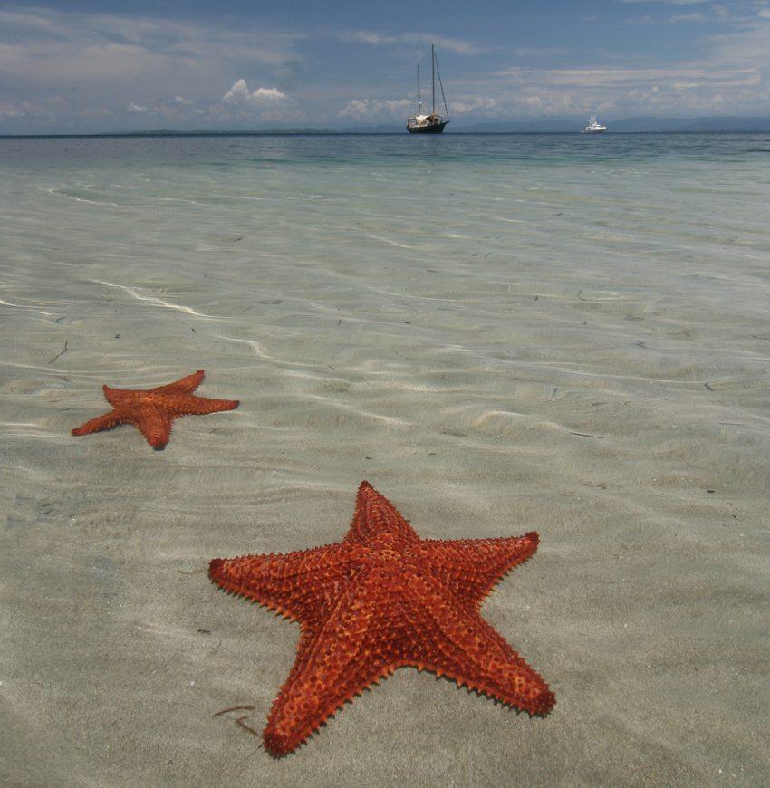 Der Strand der Seesterne, Bocas del Toro (Bild: JurriaanH, Wikimedia, CC)
