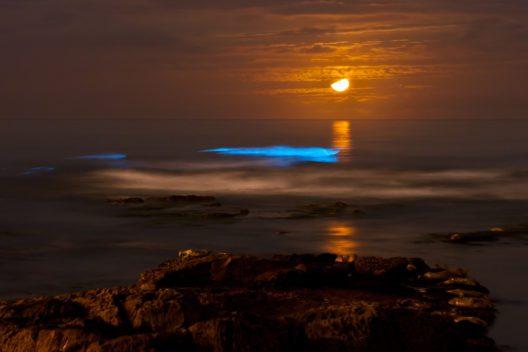 Meeresleuchten sorgt für ganz besondere Eindrücke. (Bild: Kevin Key - shutterstock.com)