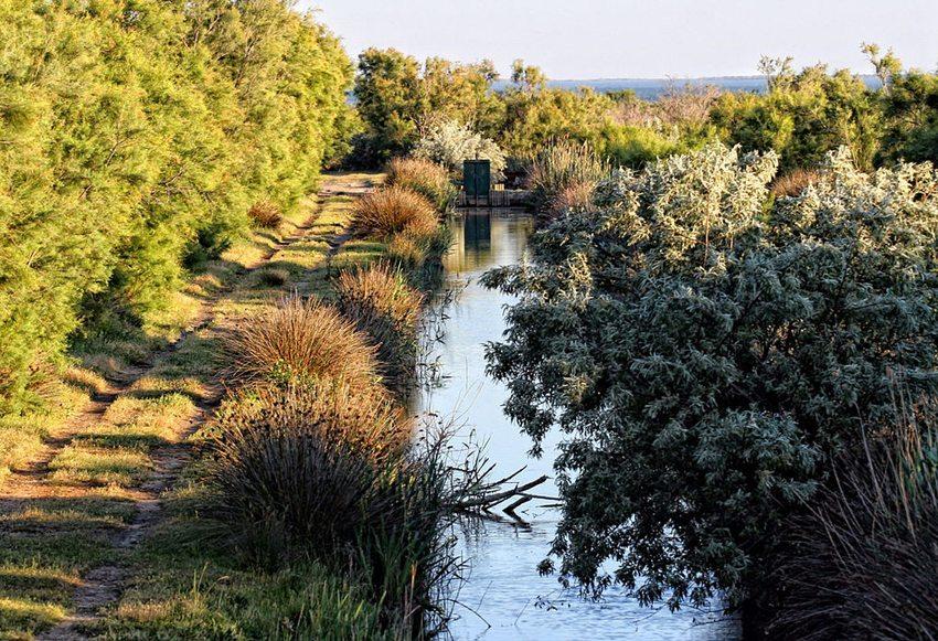 Kanal im Nationalpark Camargue (Bild: bibendum84, Wikimedia, CC)