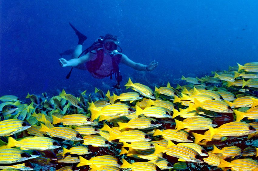 Tauchen am Banana Reef von Malediven (Bild: Michel Royon, Wikimedia, CC)